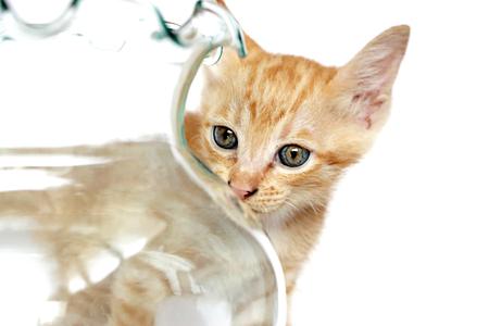 Little kitten sniffs photo