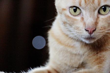 domestics: Cat face close-up