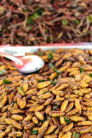 larvae: Fried insect larvae snack