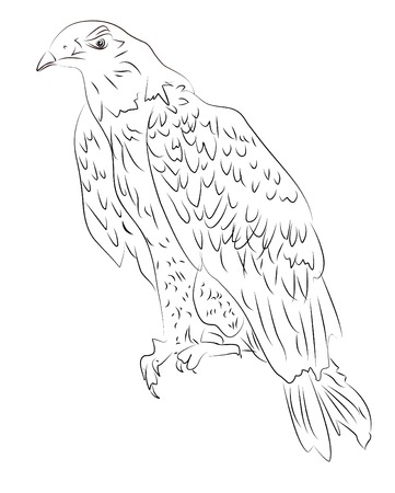 Hand-drawn sketch of eagle
