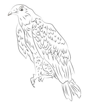Hand-drawn sketch of eagle