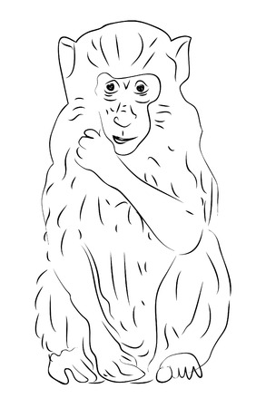 Hand-drawn sketch of sitting monkey