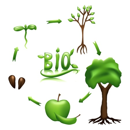 Apple life cycle and bio sign. Gradient mesh Illustration