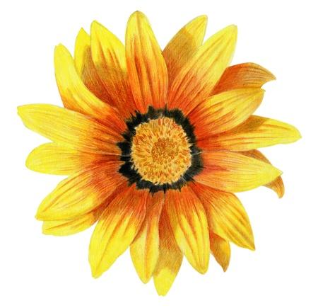 georgina: Bright pencilled yellow dahlia flower