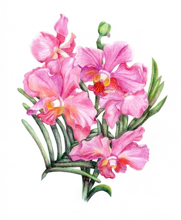 Beautiful pencilled pink orchid branch