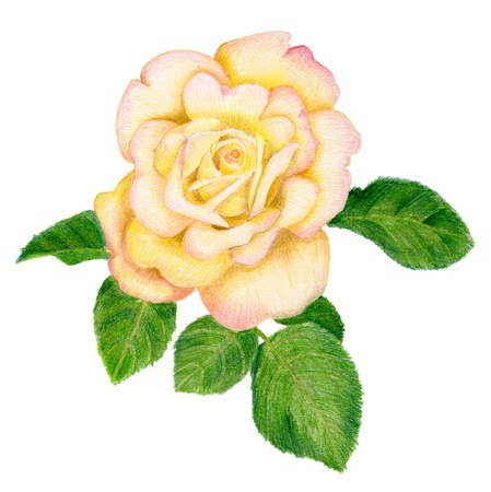 Pencilled golden rose with leaves photo