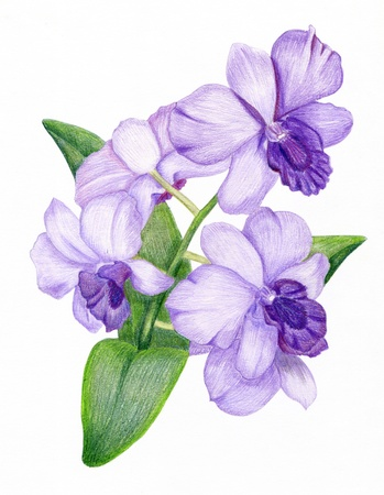 Beautiful pencilled lilac orchid branch