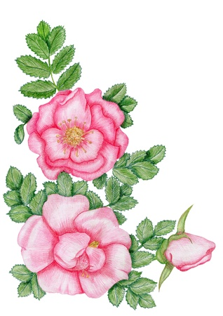 Gentle floral corner with dog-roses photo