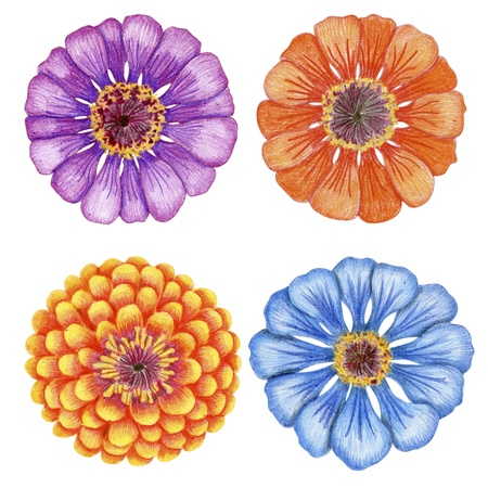Penciled bright zinnia flowers Stock Photo