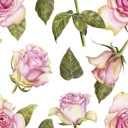 Beautiful pencilled pattern with roses on white background Stock Photo