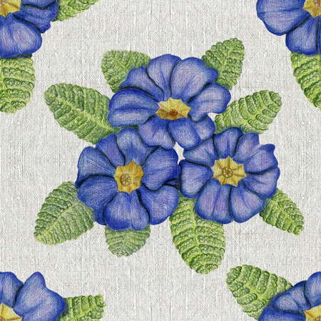Beautiful penciled pattern with primulas on canvas background Stock Photo