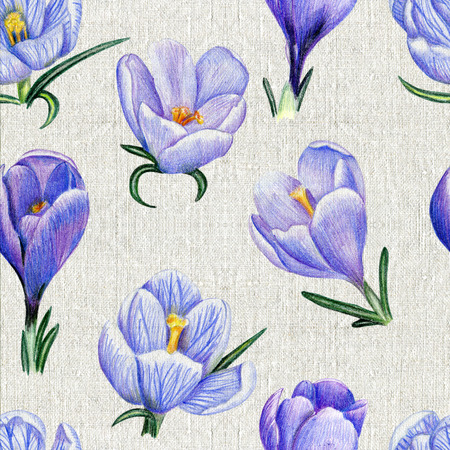 Beautiful penciled pattern with crocuses on canvas background