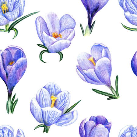 Beautiful penciled pattern with crocuses on white background photo
