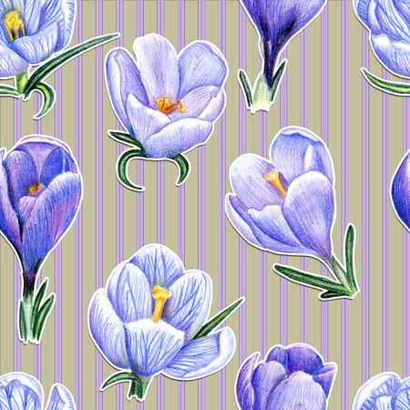 Beautiful penciled pattern with crocuses on striped background