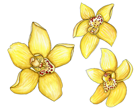 Scrap set of yellow watercolor orchids with a stroke isolated on white