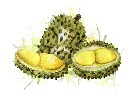 Composition with watercolor durian