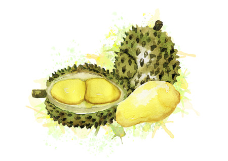 Composition of watercolor durian