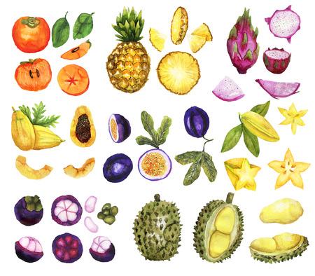 Hand drawn tropic fruit set