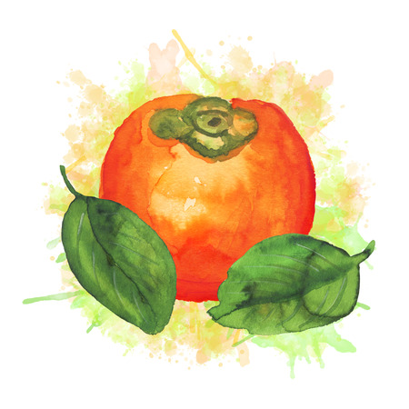 Composition with watercolor persimmon Stockfoto