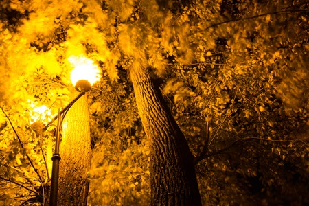 A beautiful tree is highlighted by a lantern in the park.