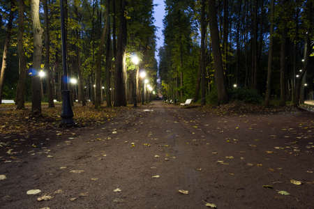 Road In the park in the evening with illuminated night lights.