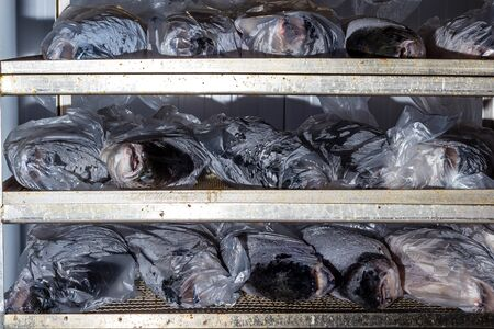 Chilled fresh fish on shelves laid out for processing and packaging at the factory. In polyethylene