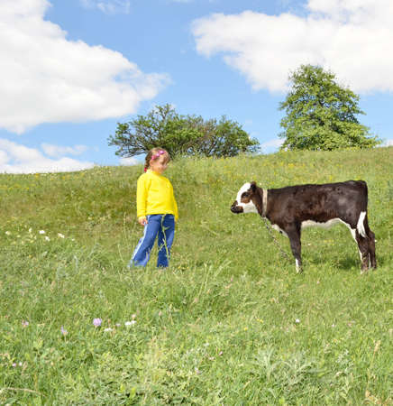 calf: The Child and calf, on meadow. The Herb and flowerses. Stock Photo