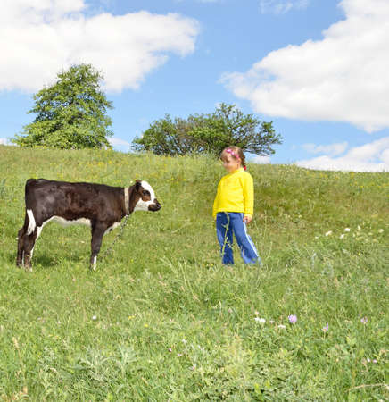 The Child and calf, on meadow. The Herb and flowerses. photo