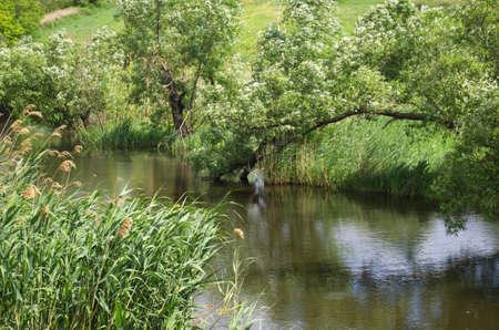 photographies: on photographies, the river on background of the nature.