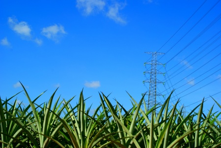 High power above pineapple Stock Photo - 10587327