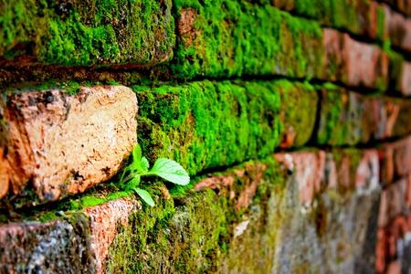 Little tree on old brick wall photo