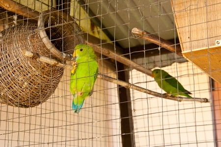 Parakeet in prison photo