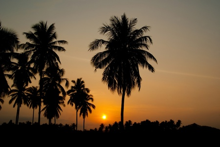 Sunset and coconut tree photo