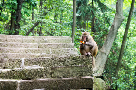 wrappers: monkey with candy wrappers in the natural forest of China
