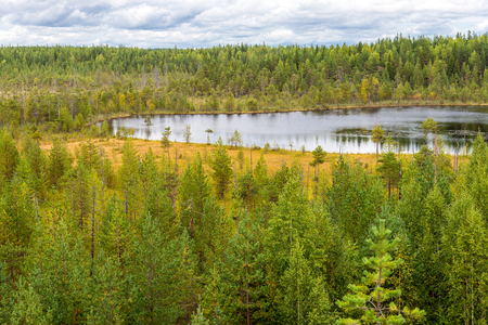 sever: autumn landscape of pine forest in Russky Sever National Park, north Russia
