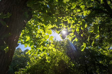 sunlight through the leaves of a tree