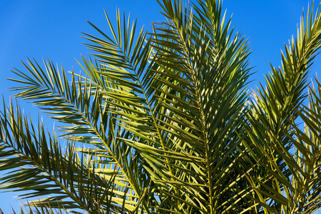 leaves of palm trees in sun light on blue sky