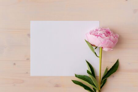 Pink peony flowers on white wood  with copy space Banco de Imagens - 133745042