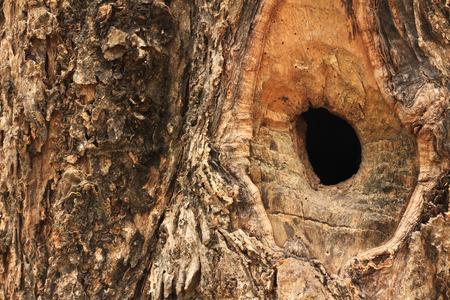 burrows: squirrel burrows
