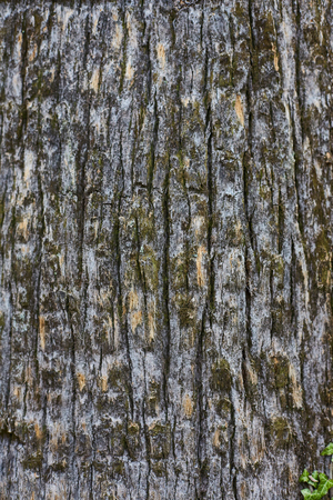 pine tree bark vertical texture Stock Photo