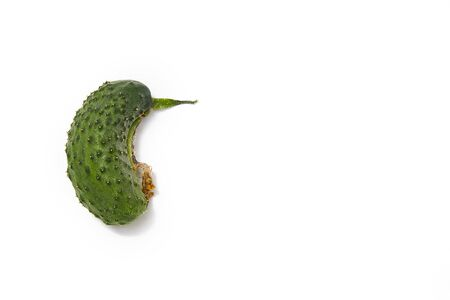 Organic ugly cucumber on white background, top view. Copy space.