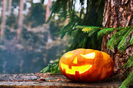 halloween concept. glowing Pumpkin under a tree in a dense forest