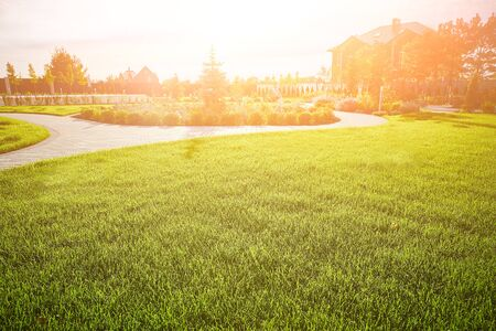 Landscaping. Glade with green grass and spruce in the background in the evening rays of the sun. Copy space.