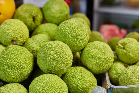 Maclura pomifera orange Apple-bearing or dye mulberry or false orange. The mulberry family. Group Rosaceae. Fruit of the tree on the counter in a box. 免版税图像