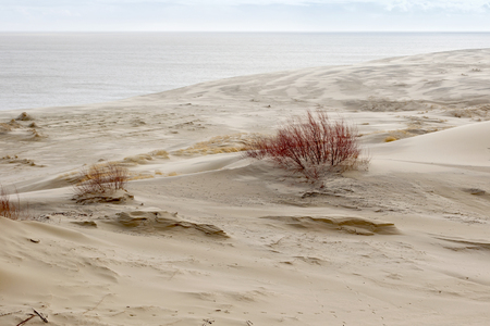 separates: Sand dunes of the russian part Curonian Spit in february. It is a 98 km long curved sand-dune spit that separates the Curonian Lagoon from the Baltic Sea coast.
