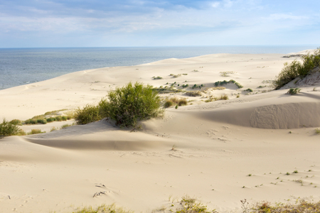 Sand dunes of the russian part Curonian Spit in autumn. It is a 98 km long curved sand-dune spit that separates the Curonian Lagoon from the Baltic Sea coast.