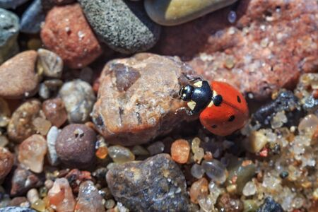 Red ladybug on the small stones in sunny day.