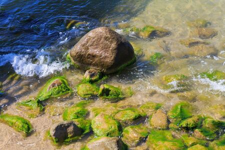 Large stone covered with green algae on the sea coast.