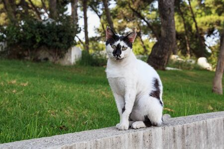 Portrait of the spotted black and white cat in the Tangier, Morocco.