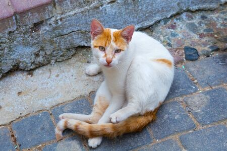 Redhead street cat on the old cobblestone.